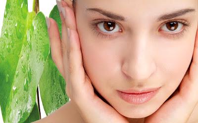 manfaat daun binahong untuk kulit jerawat