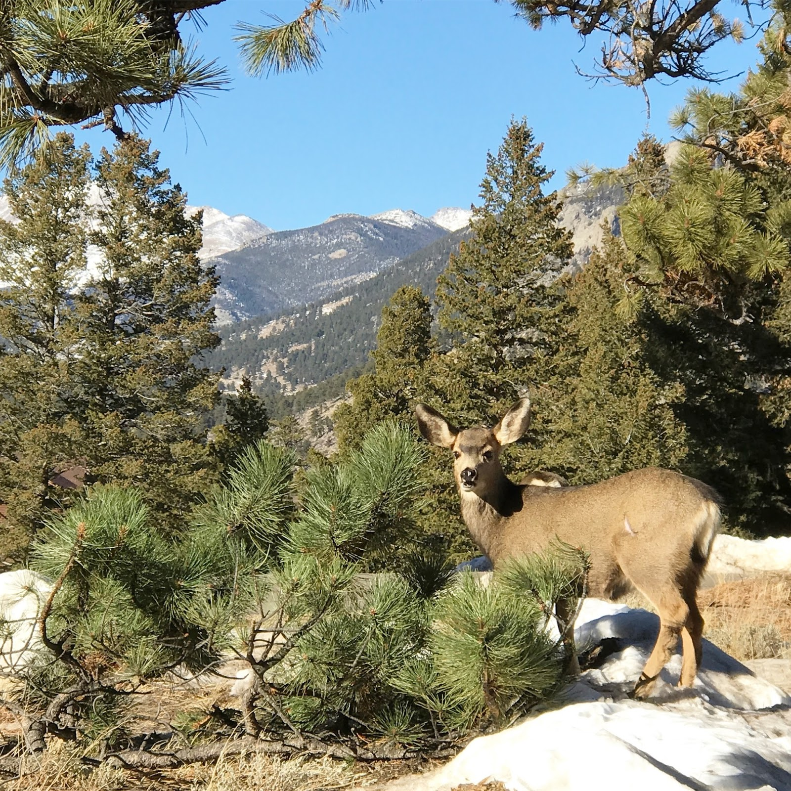 Campgrounds Estes Park Colorado: New Years Weekend At YMCA Of The Rockies: Estes Park