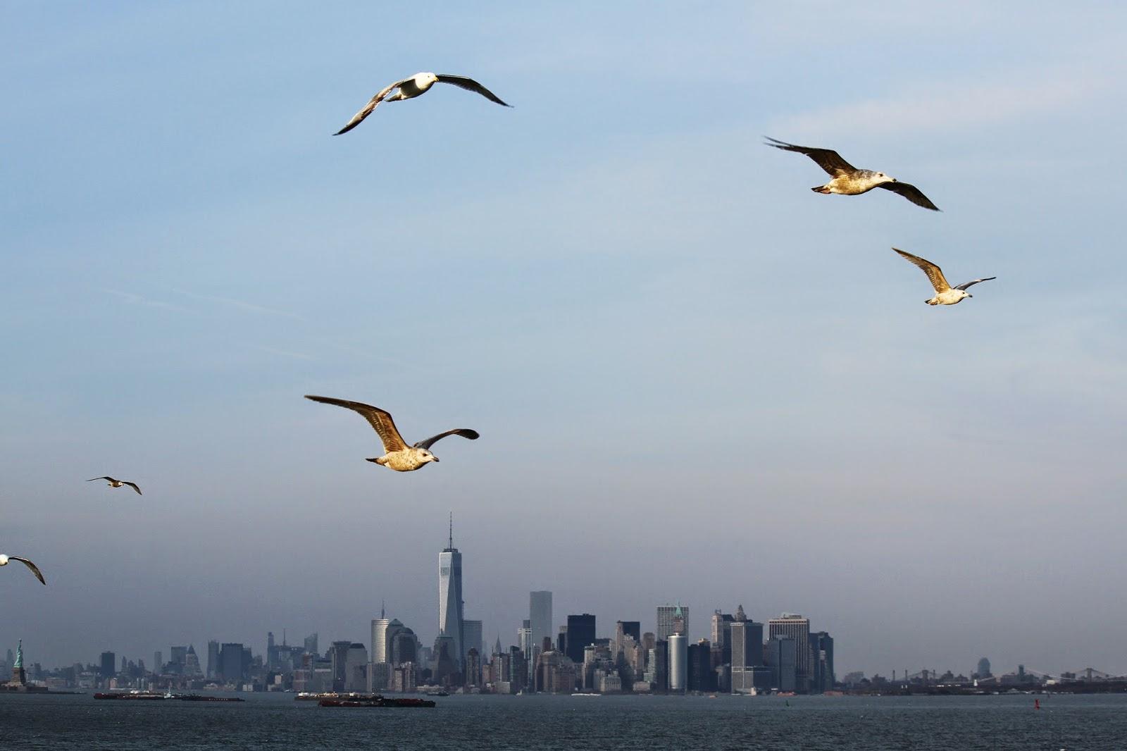 Experimentando o STATEN ISLAND FERRY, o melhor cruzeiro gratuito de Nova Iorque | EUA