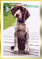 Sweetest German Shorthairs