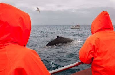 Dos hombres en impermeables naranjas avistando ballenas en abril en el norte de Islandia