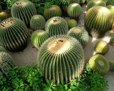 Plantas cultivadas México
