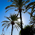 TUI Family Life Bahia Feliz Gran Canaria Review