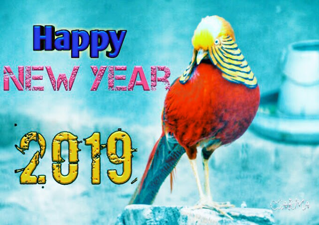 Happy New Year 2019 Wishes for friend