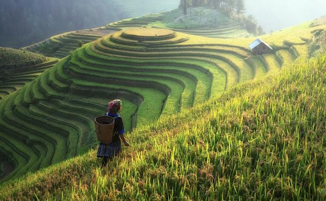 Hidden Beautiful Of The Muong Hoa Valley