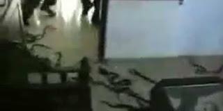 Warga Kangean Lepas Ratusan Ular di PN Sumenep