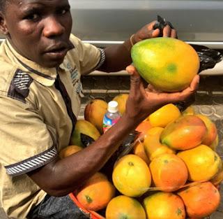 eat a mango daily