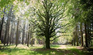 arbre foret ecouves