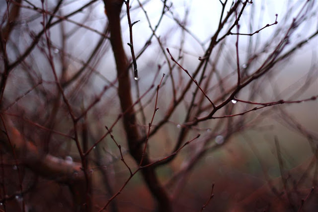 tree branches and raindrops