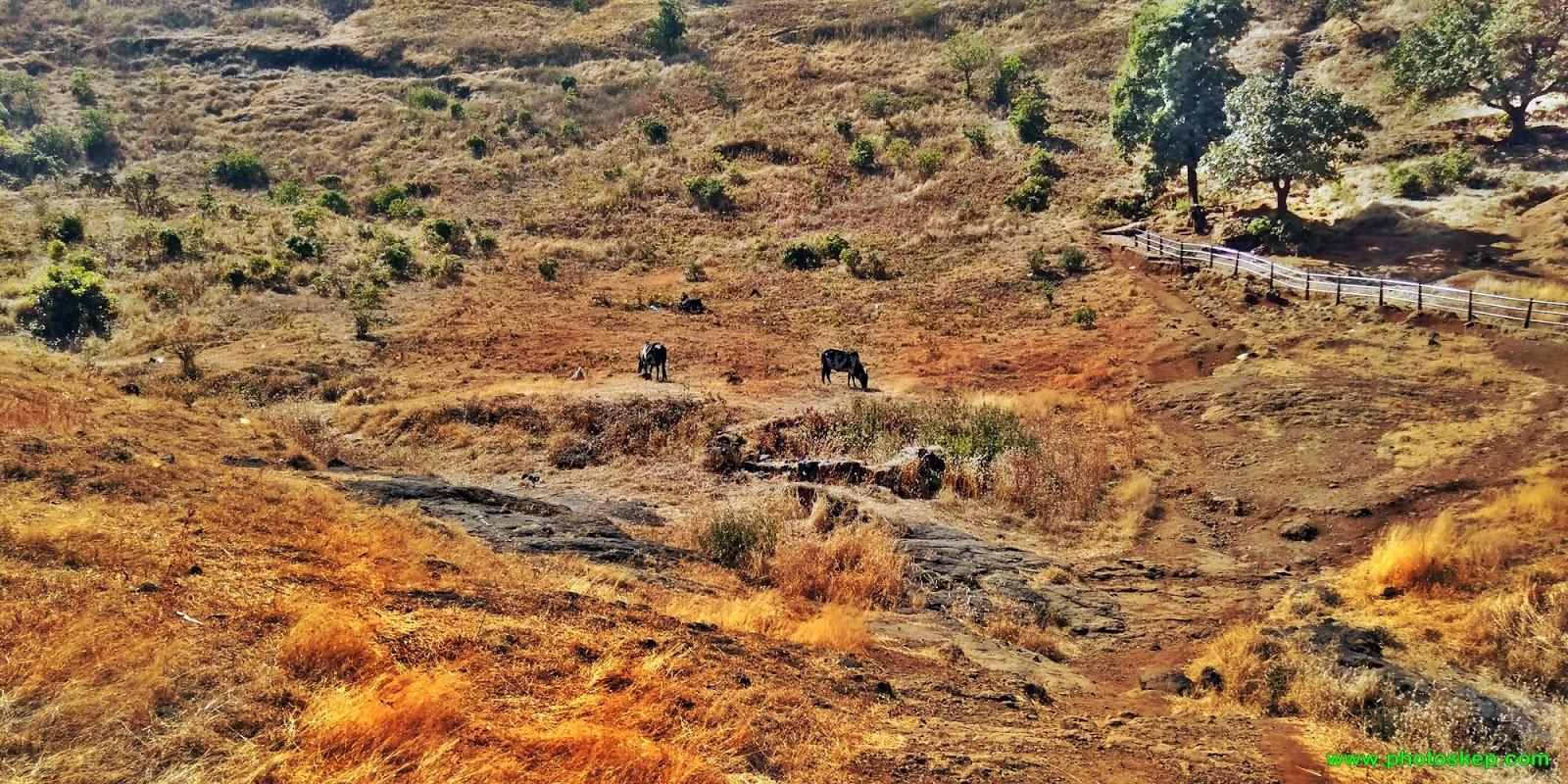 Brahmagiri - Brahmagiri parvat Hills and Mountains photos images free wallpaper