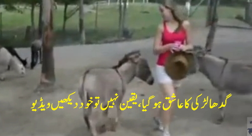 Donkey dont want other come near this girl...hahahah