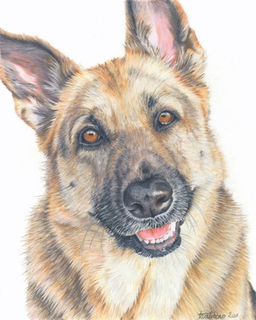 Pet Portraits Drawing Colored Pencils