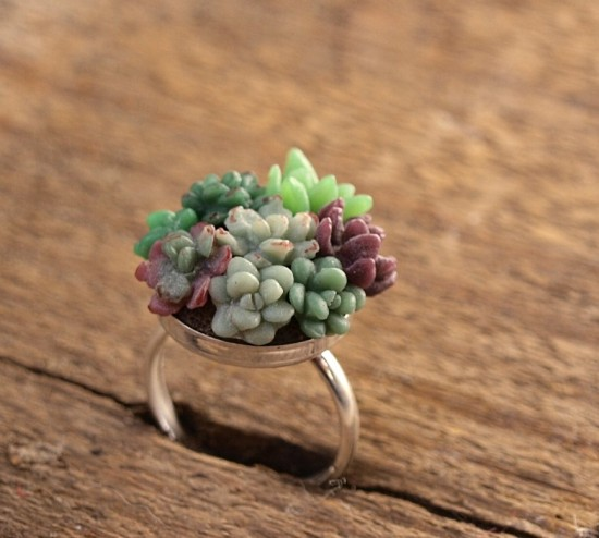 Bella Vita: creative succulents