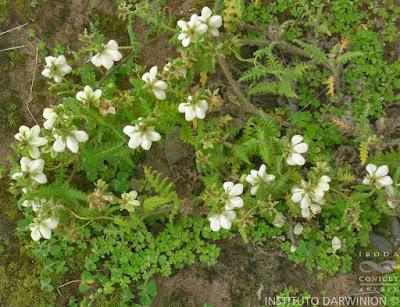 flora nativa Caiofora
