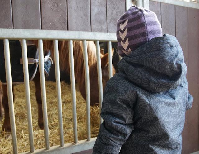 Frühling im Tierpark Gettorf (+ Verlosung). Auch der Pferdestall des Tierparks ist einen Besuch wert.