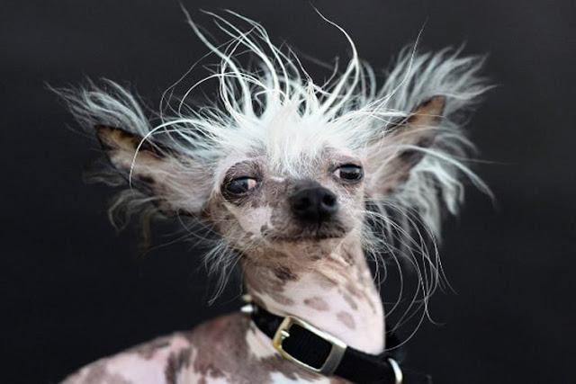 10 معلومة عن الكلاب {مفاجئة لا تعرفها 2019!}