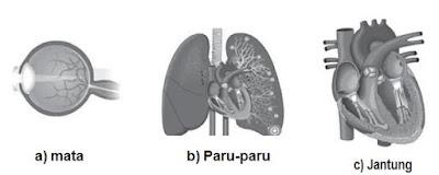 Beberapa Organ pada Manusia