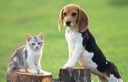 Συνεργασία Δήμου Λαρισαίων – ΕΛΑΣ για την τήρηση του νόμου για τα ζώα συντροφιάς