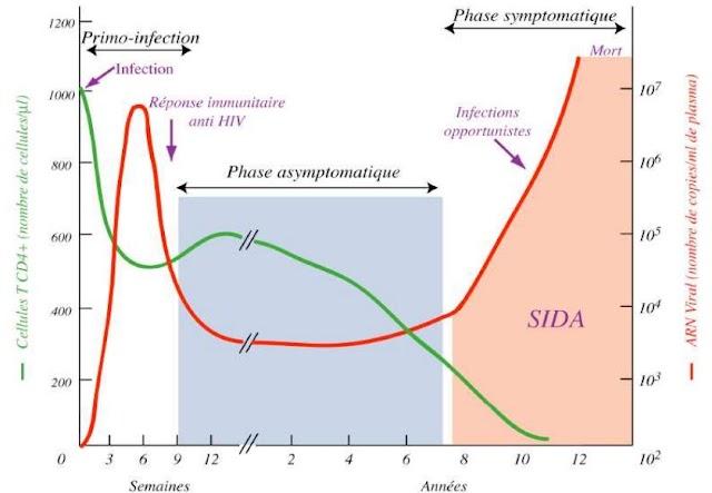 Symptômes et évolution du VIH - Immunologie - Santé - Virologie