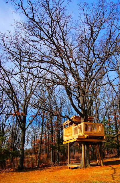 Robinson Family Treehouse