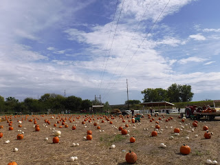zipline over pumpkin patch at Scarecrow Farm near Sioux City Iowa
