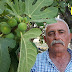 Ödemiş inciri 15 güne piyasada
