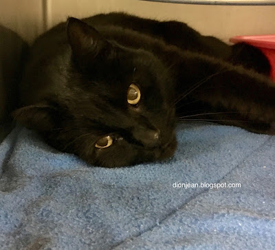 Black cat in the shelter