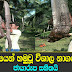 More than 10 feet long snake caught in Dematapitiya Srilanka