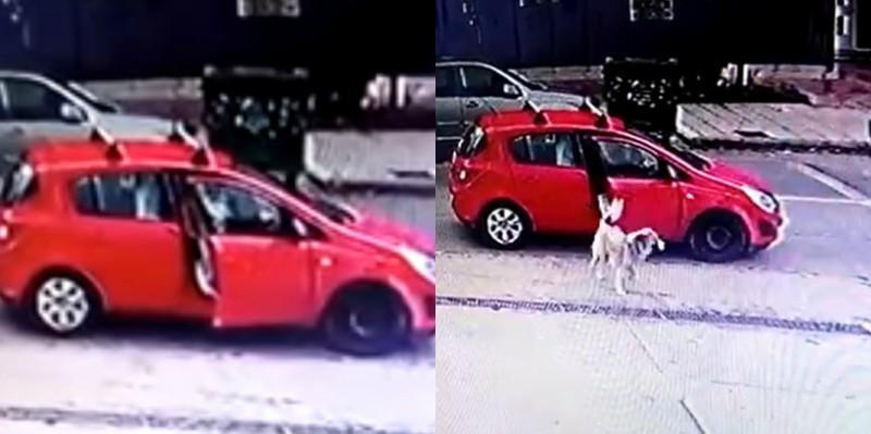 Καλαμαριά: Κάμερα καταγράφει γυναίκα να παρατάει στο δρόμο το σκύλο της (βίντεο)