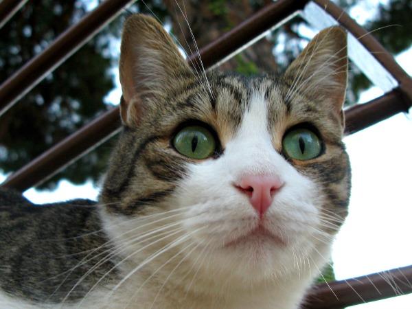 katten van cannes