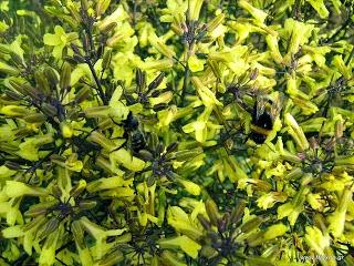 Οι μέλισσες, τα μελίσσια και το μέλι