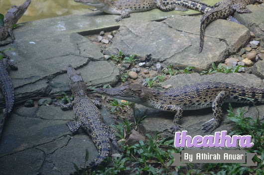 #Ayamstosarawak : PART 5 ( Jong Crocodile )