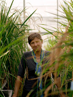 Plant geneticist Pamela Ronald in her lab's greenhouse at UC Davis. (Credit: Molly Matalon) Click to Enlarge.
