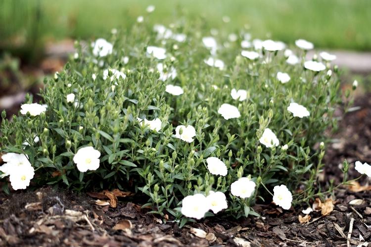 fim.works: Draussen | Typisch für ... meine Blumen
