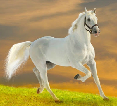 White Horses | White Horses | Forest View Farms, horseback riding ... | 364x400