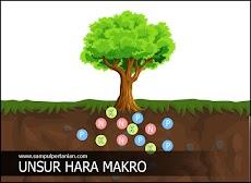 Unsur Hara Makro yang dibutuhkan bagi Tanaman