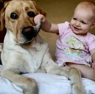 Dog puts up with baby