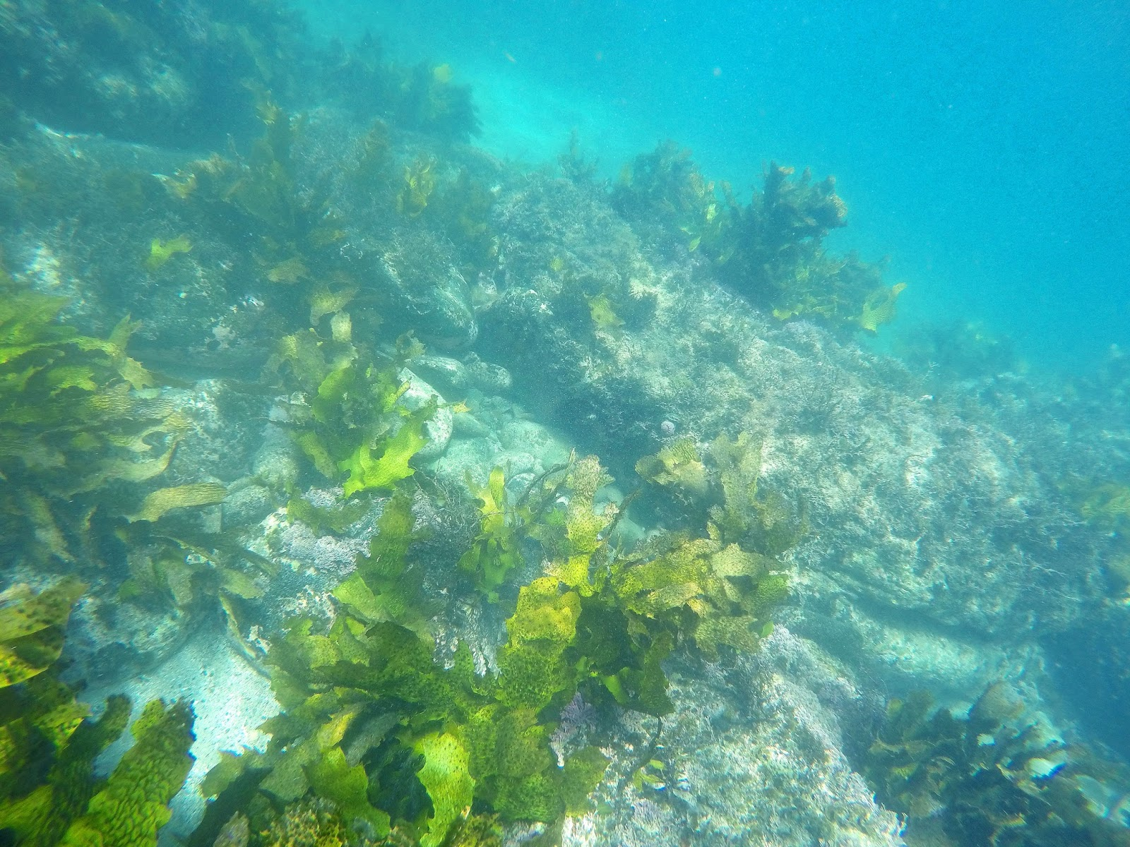 The secluded Gordons Bay in Sydney has been voted one of the best snorkelling spots in the city and for a good reason. Click to read more.