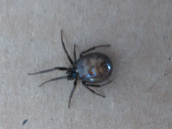 vision of jesus in the abdomen of a black widow spider