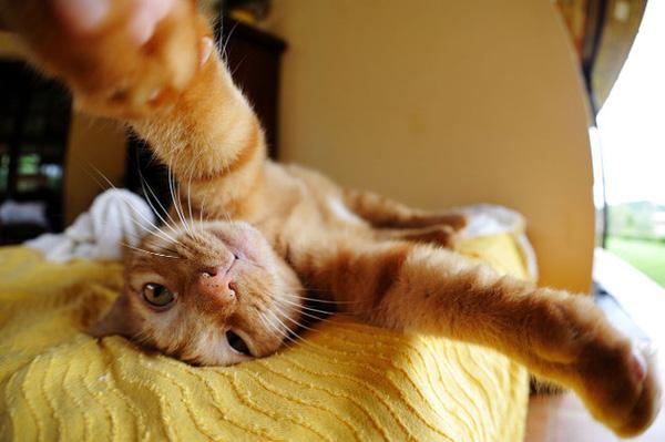 15 khoảnh khắc tự sướng cực kỳ đáng yêu của những chú mèo nghịch ngợm