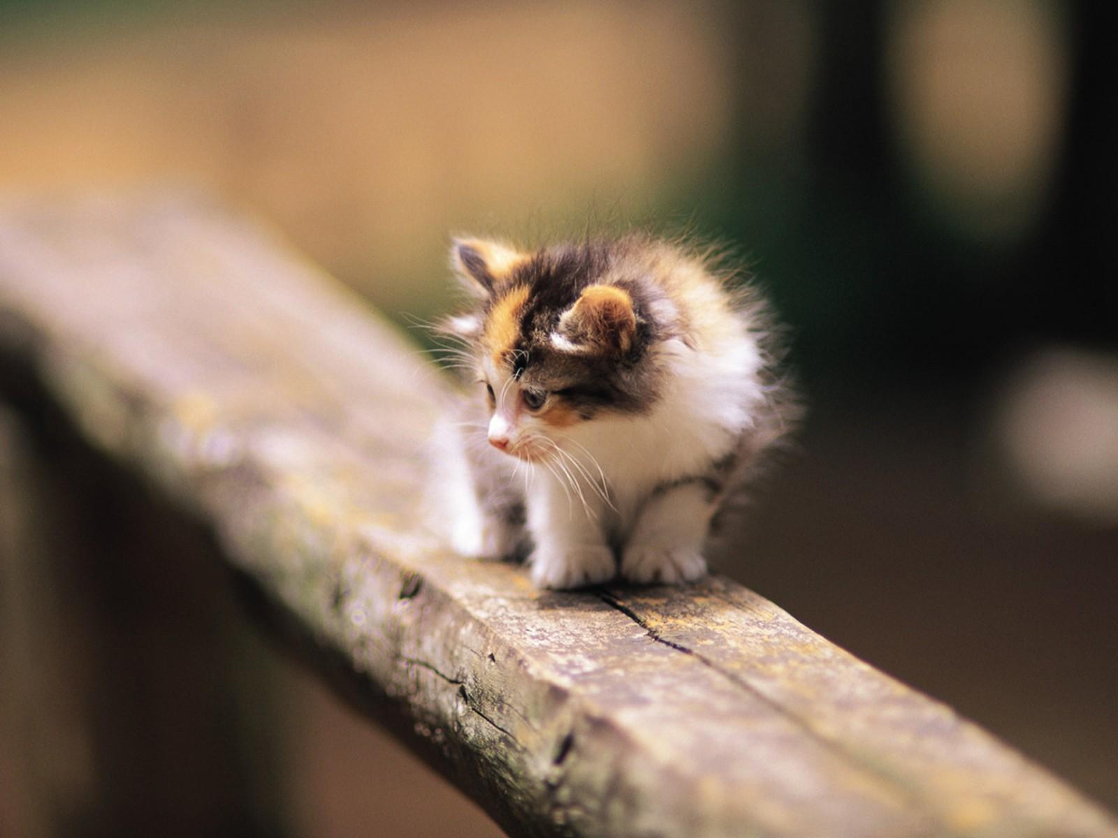 10 gambar kucing paling cantik dan imut