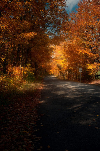 Sunshine on a rural road in the fall.
