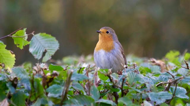 Bird Perching on Plant HD Wallpaper