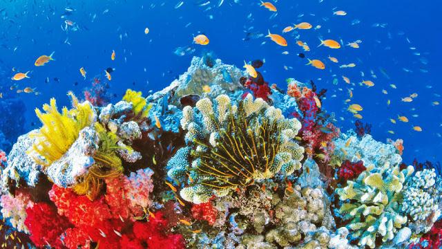 Coral-Reef-Lakshadweep