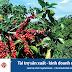 Viet Capital Bank ưu đãi cho vay sản xuất - kinh doanh cà phê
