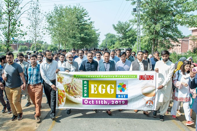 World Egg Day observed at Ravi Campus Pattoki in befitting manner