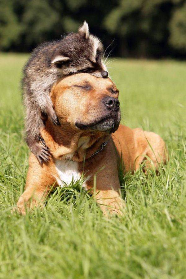 Funny animals of the week - 20 October 2017, funny animal image, best funny animal images, cute animal