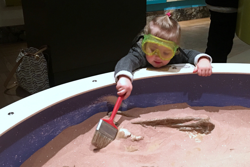 Digging for Dinosaurs at the Royal Ontario Museum