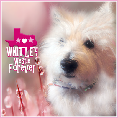 Whitley the Westie Forever badge