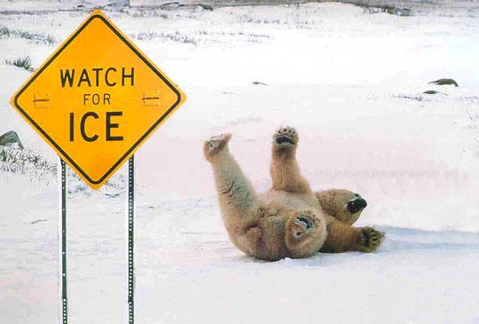 polar bears definitely cannot read